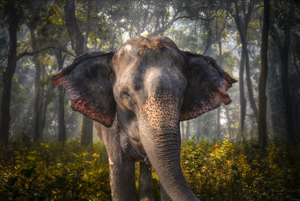 Enjoy a day with elephants in Chitwan National Park