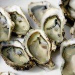 Oyster Tasting on Pelješac Peninsula