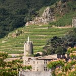 The terraced vineyards of the Rhône Valley