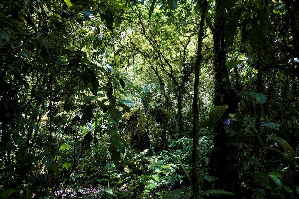 Take a stroll through Braulio Carrillo National Park