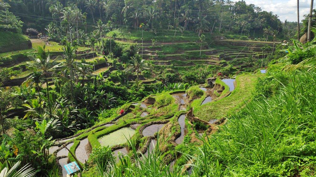 Tegalalang rice paddies