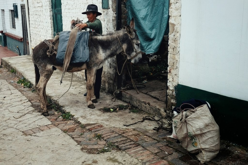 Mule being packed by his rider - Mongui, Boyaca, Colombia
