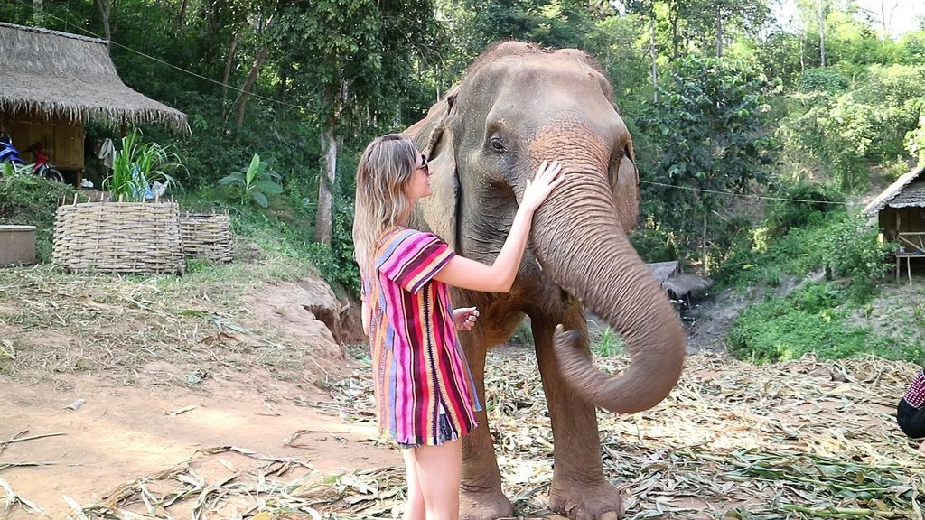 Visit the Elephant Jungle Sanctuary outside of Chiang Mai
