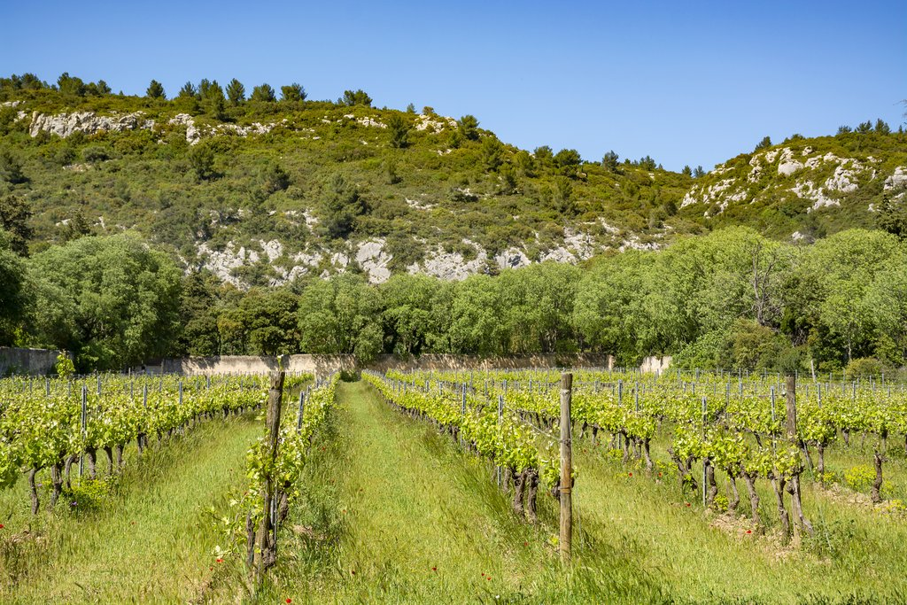 Explore the scenery in the Alpilles