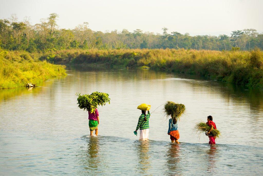 Autumn harvest season in Chitwan