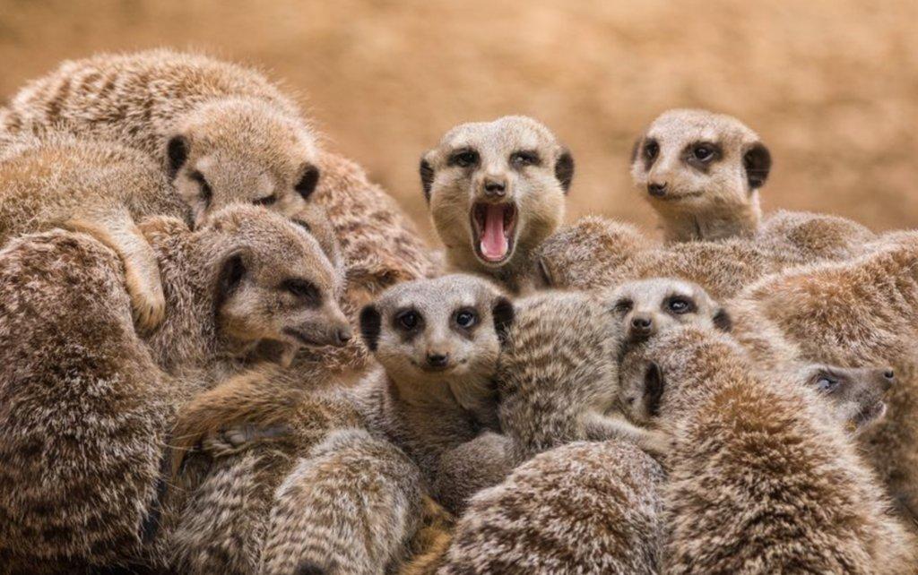 Meerkat morning experience