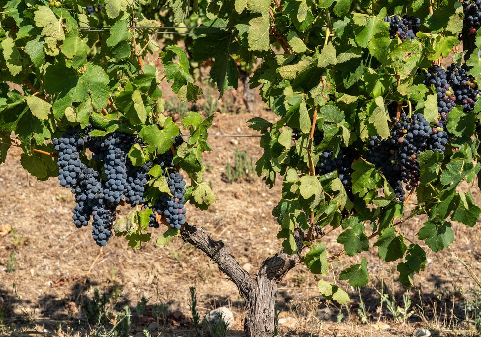 Fall is the perfect time to see the grape harvest in the Douro Valley