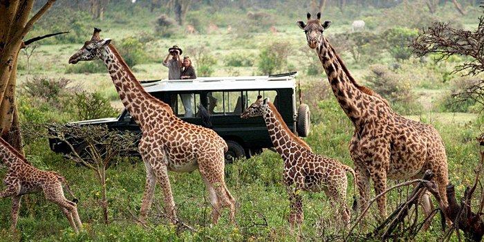 Drive from Maasai Mara to Nairobi