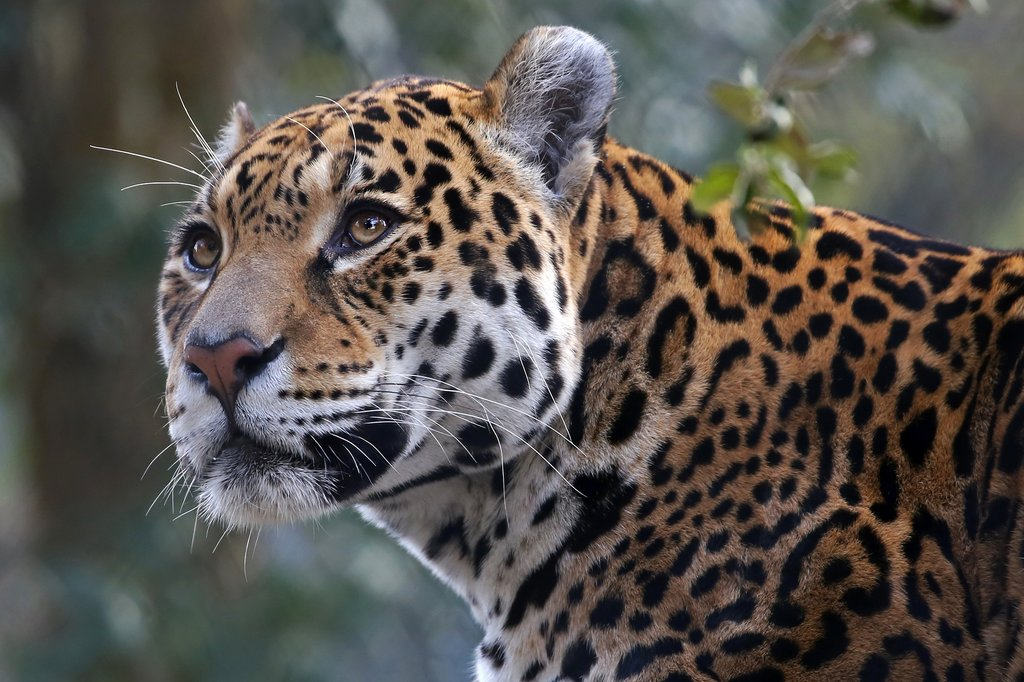 You might spot a jaguar within the park
