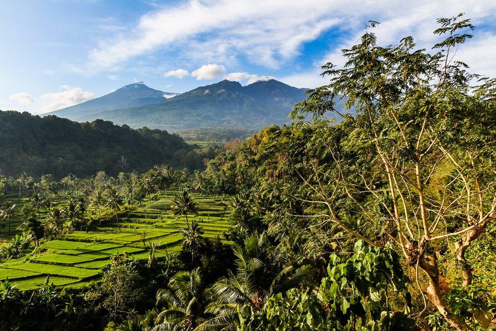 Make your way through the jungle as you head from Senggigi to Senaru