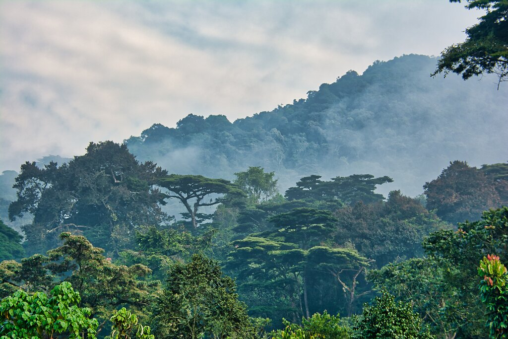 Morning mist in Bwindi Impenetrable National Park