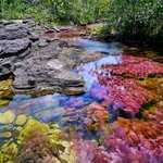 A kaleidoscope of colors at Caño Cristales