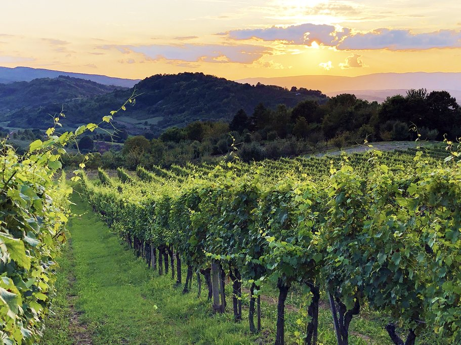 Croatia - Drškovci's vine-striped slopes of the Požega Basin in Slavonia