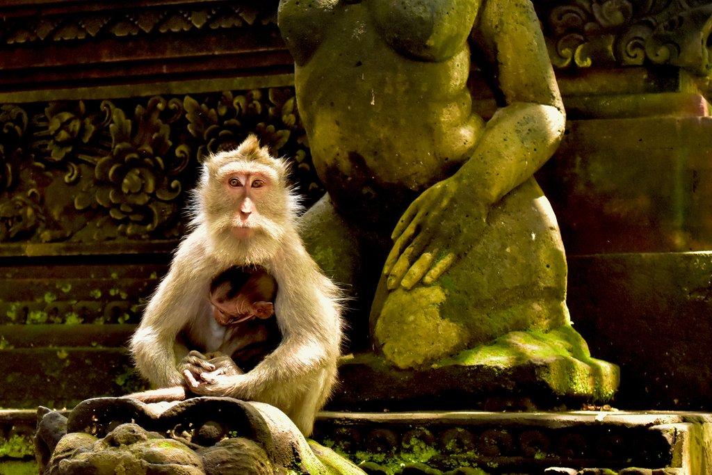 Visit the Sacred Monkey Forest in Ubud