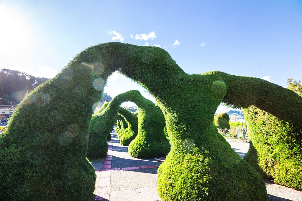 Unique topiaries of the Zarcero Gardens