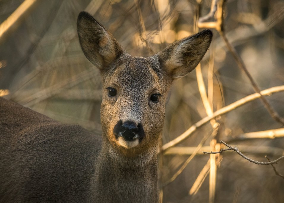 Get up close to deer on the island