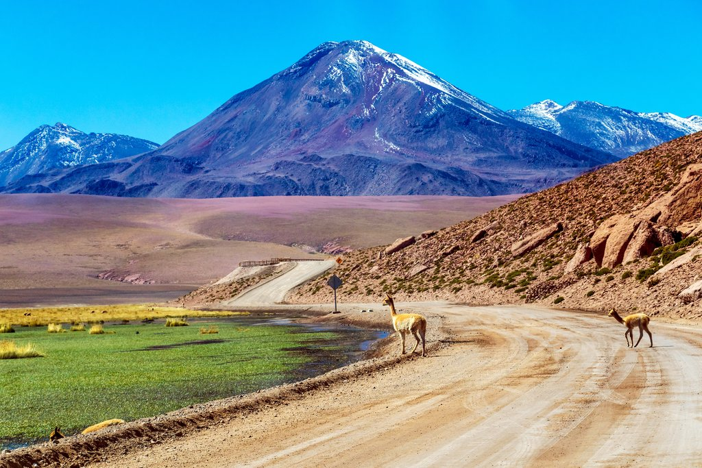 Road and vicuñas in San Pedro de Atacama