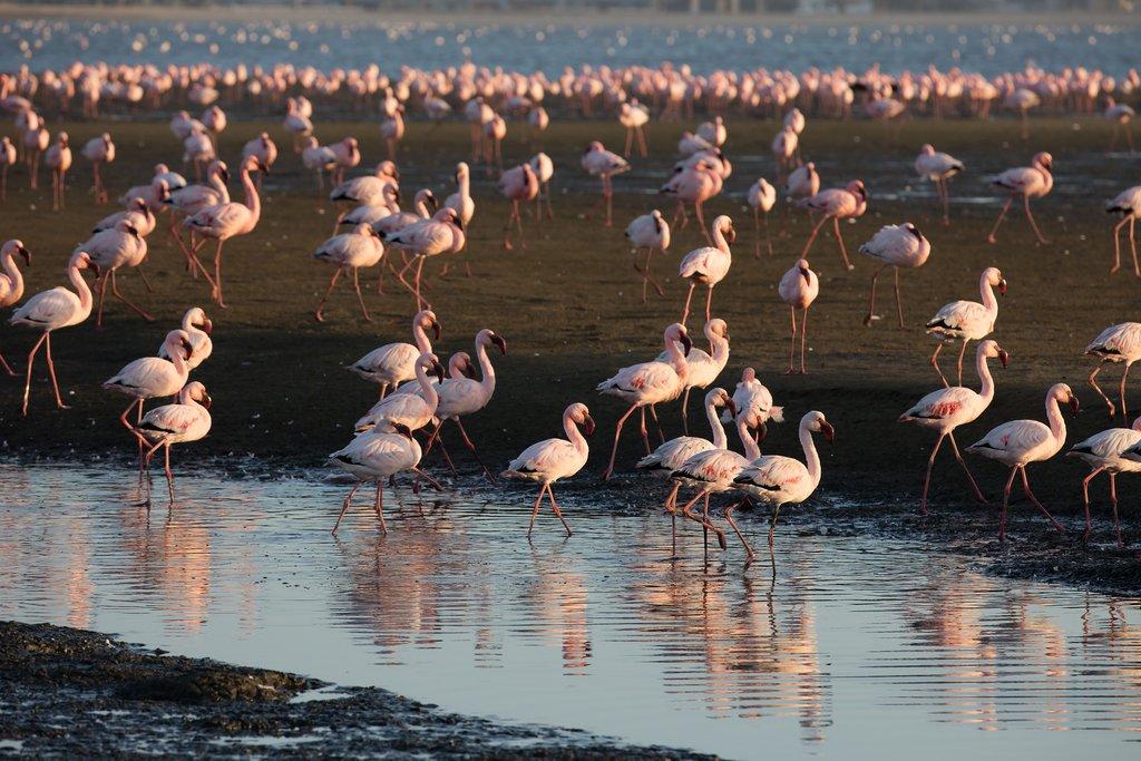 Flamingos in Swakopmund, Namibia