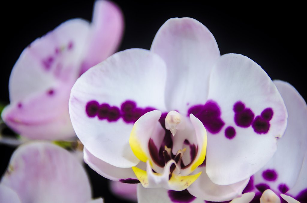 Discover orchids and other plant life on a tour of CATIE