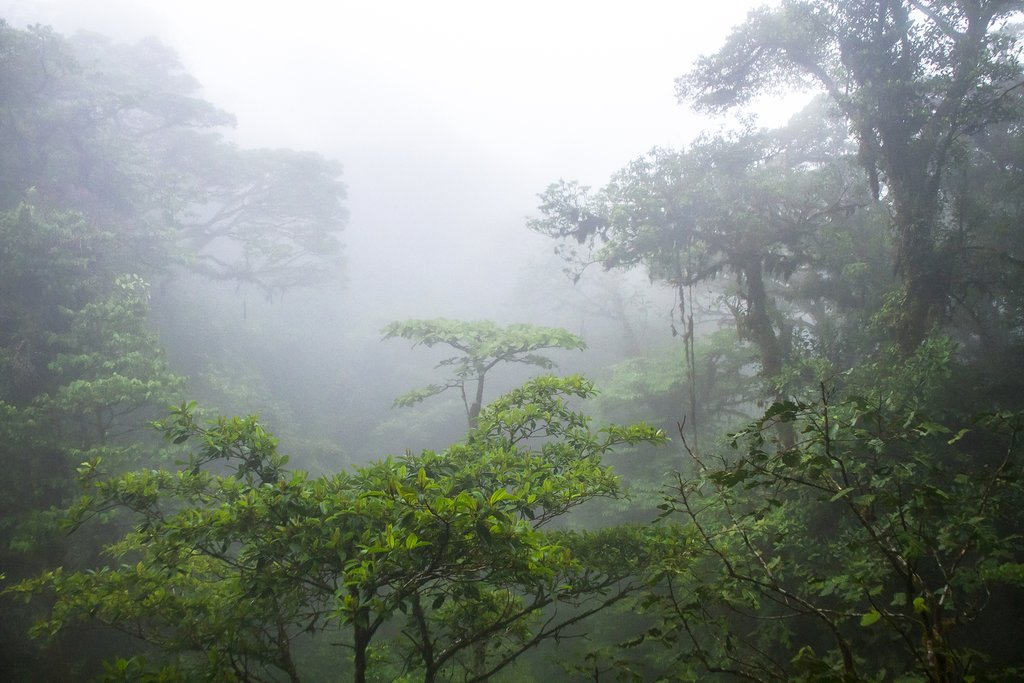 Monteverde has a cloud-forest eco-system