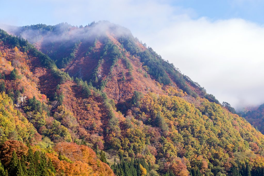 Autumn Foliage in the Alpine Region of Fukushima