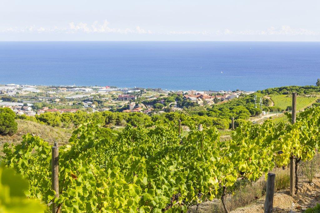 Vineyard Views Near Barcelona