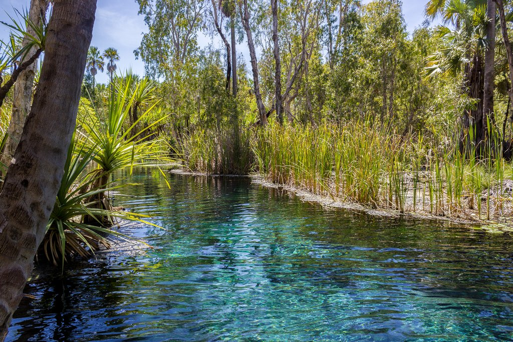 Australia - Mataranka Hot Springs