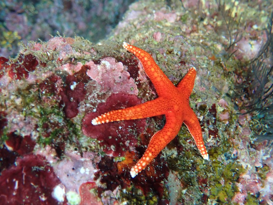 Stars of the sea