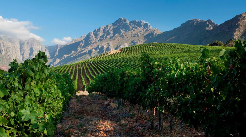 A clear day brings out the luminescent colors of the vineyard