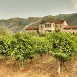 Idyllic Greek Vineyards