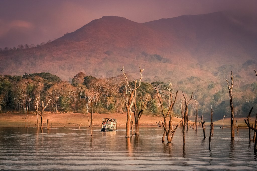 Take a boat tour in Periyar National Park