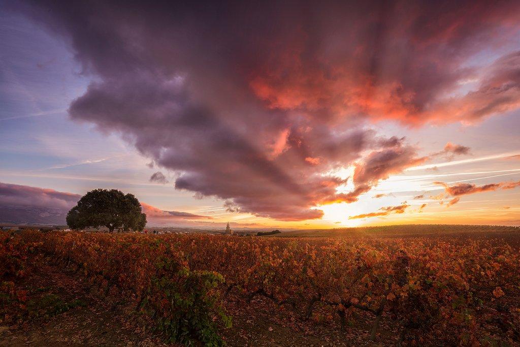 Sunset over the La Rioja vineyards