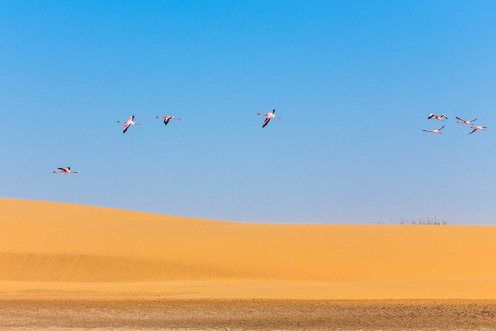 Flamingos above the dunes