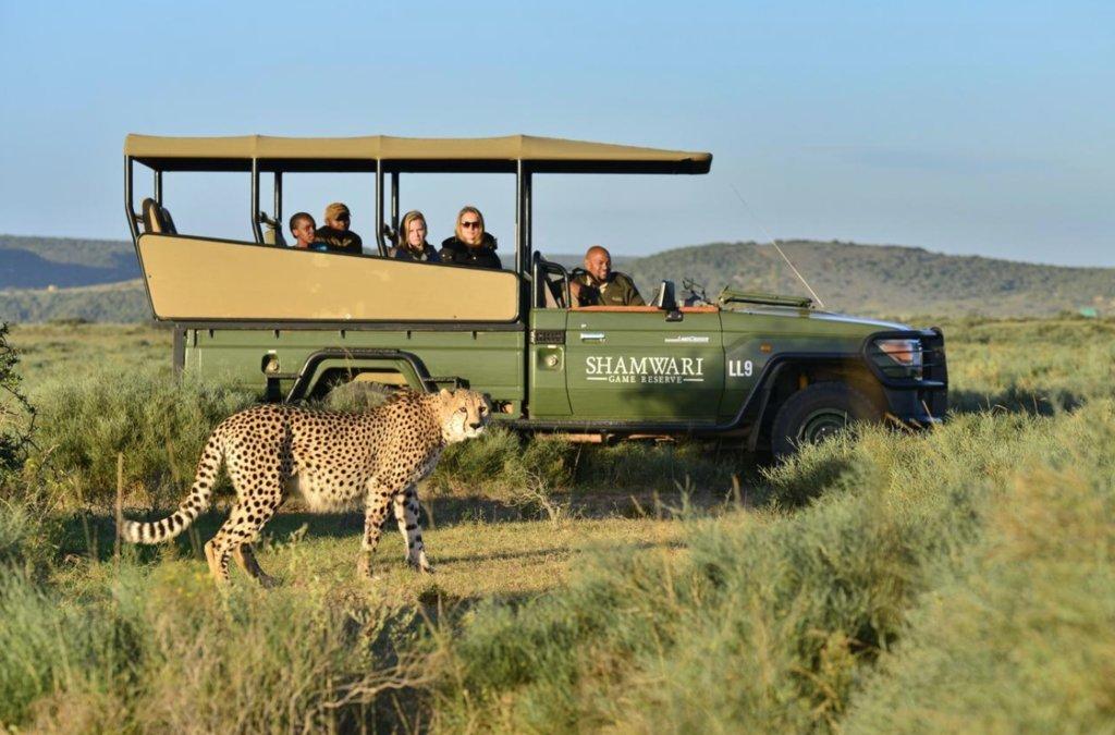 Cheetah at Shamwari