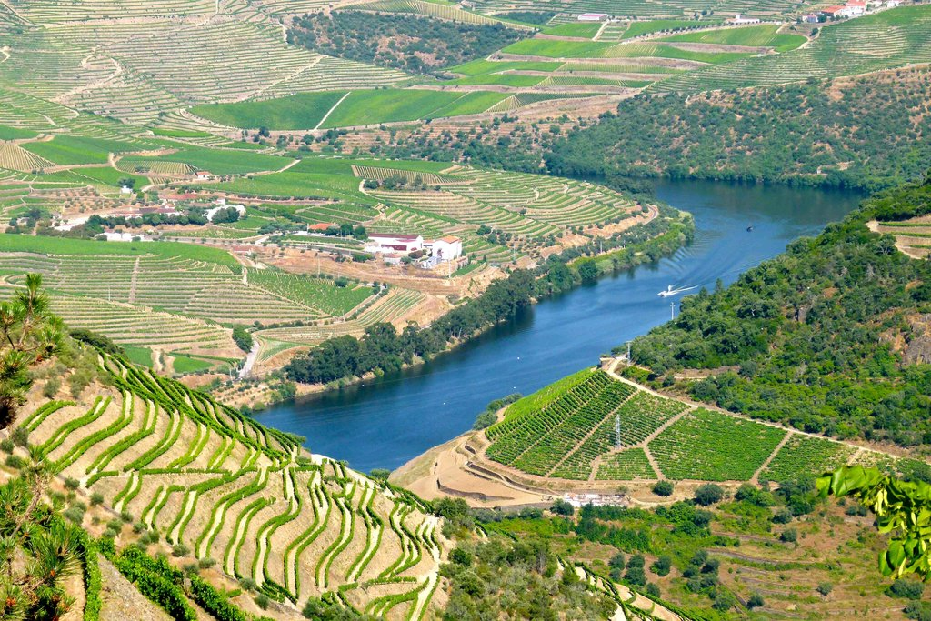 The Vineyards of the Douro River Valley