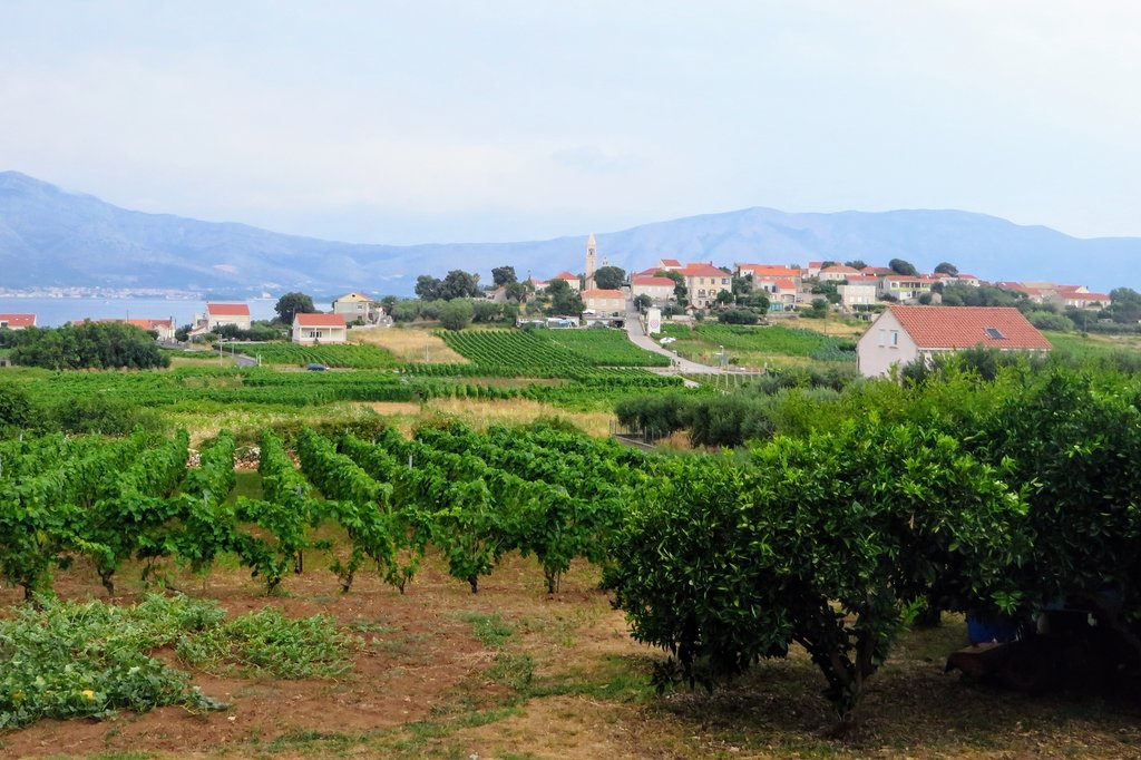 Vineyard covered hills and Lumbarda in the distance