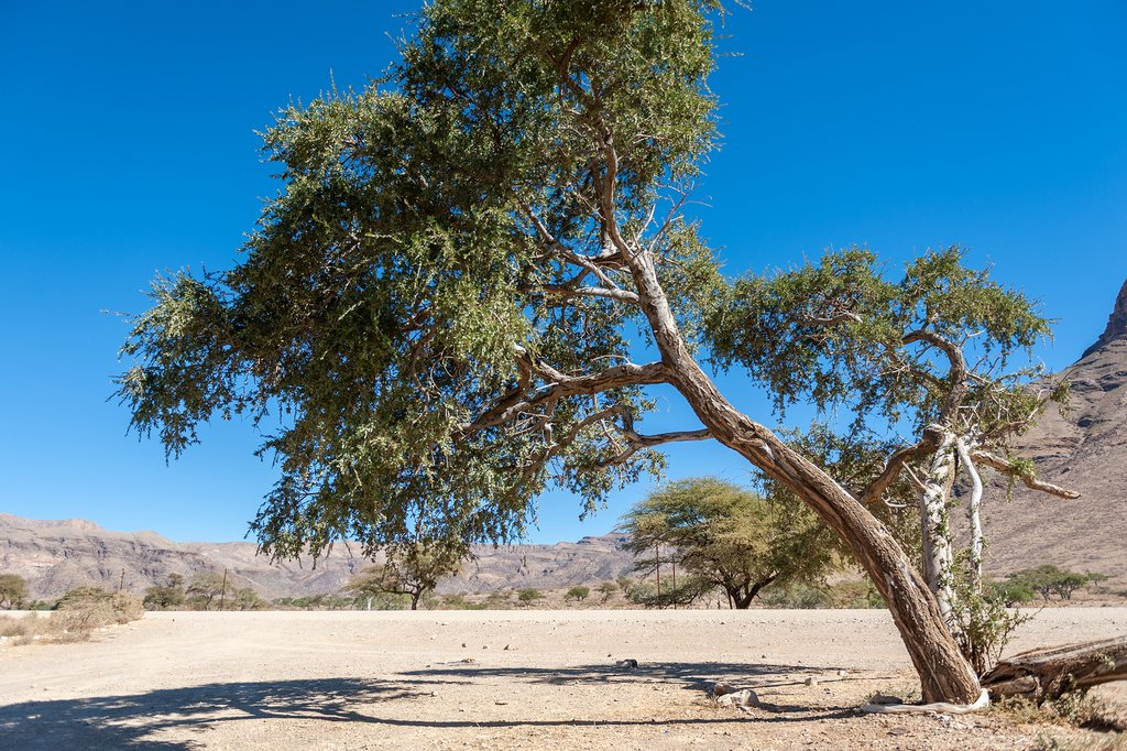 Dry landscapes in the Hardap region