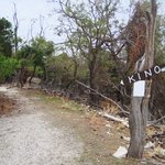 Lonely path on Goli otok