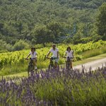 Bicycle and Wine Tour of Provence