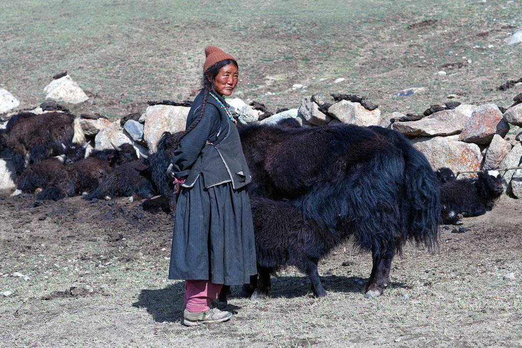 A Tibetan nomad with cattle