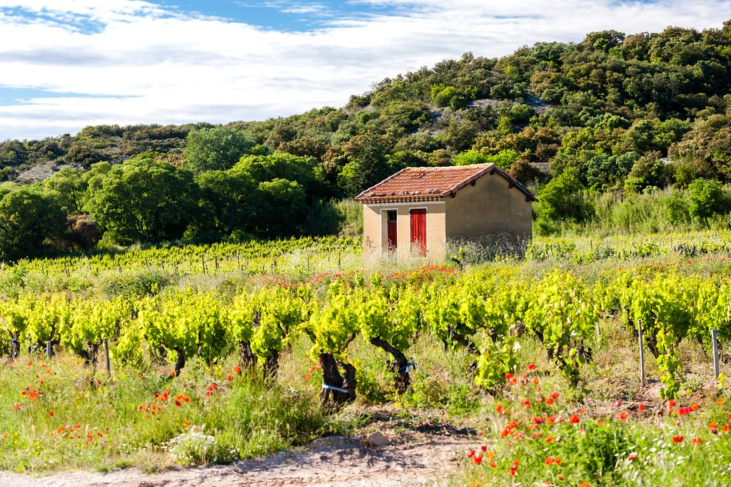 Chateauneuf du Pape, in France's Provence region