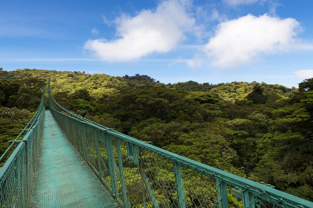 One of the cloud forest's high-altitude suspension bridges