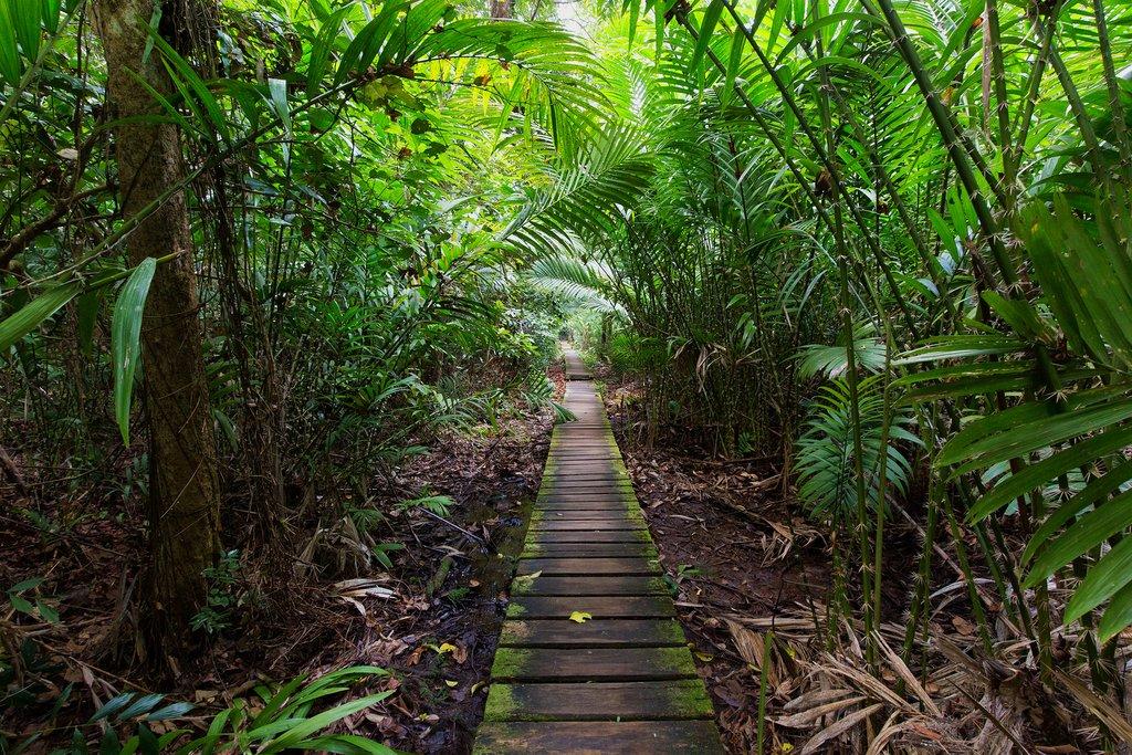 Deep jungle inside Bako National Park