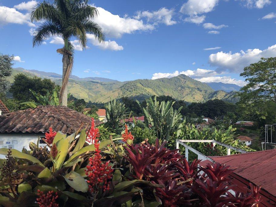 Views at the coffee farm