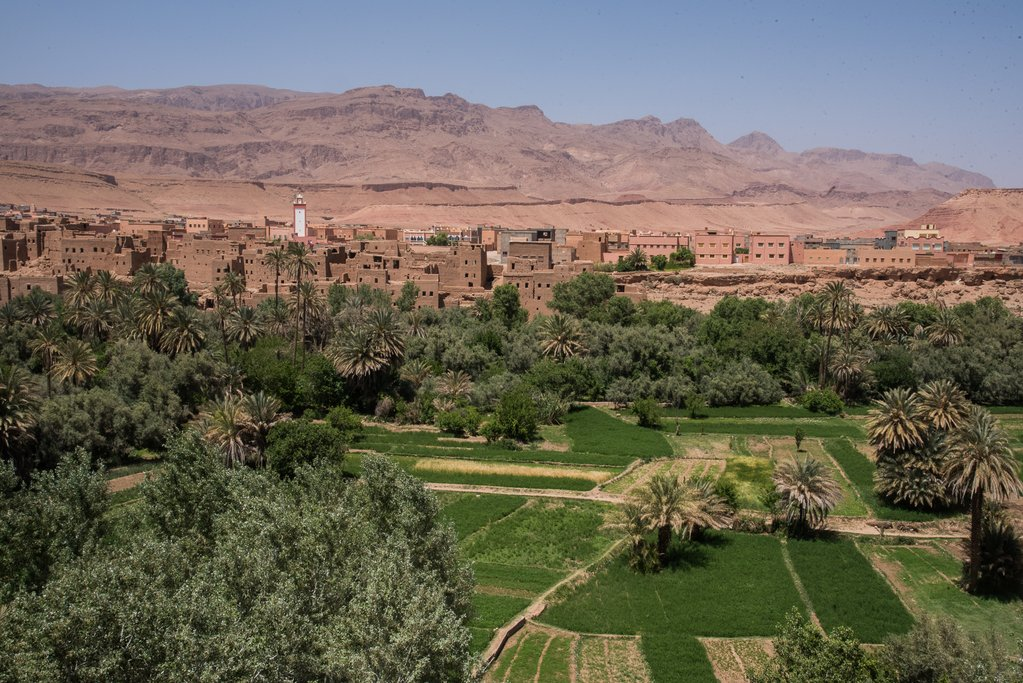 A view over the oasis near Tinerhir