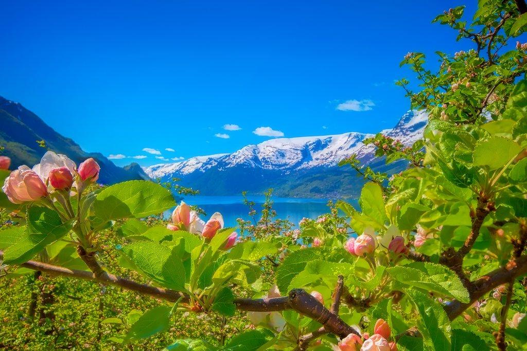 Plenty of scenery along the Hardangerfjord