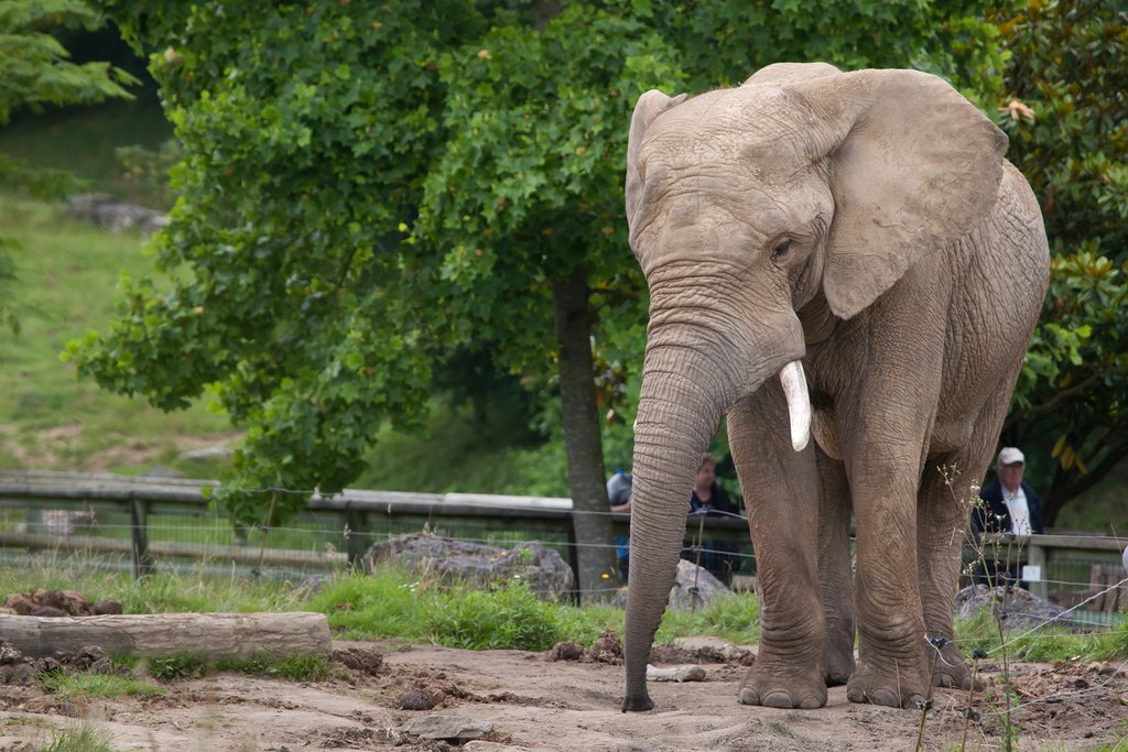 Hang with the elephants at France's largest zoo