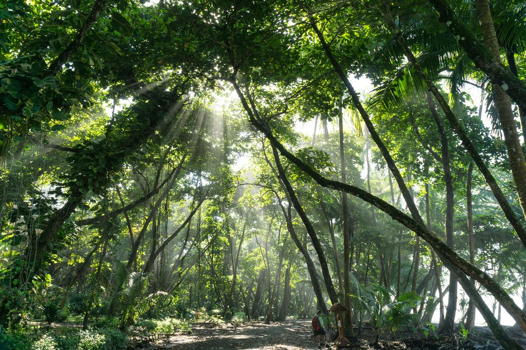 Take an optional day trip to visit Corcovado National Park