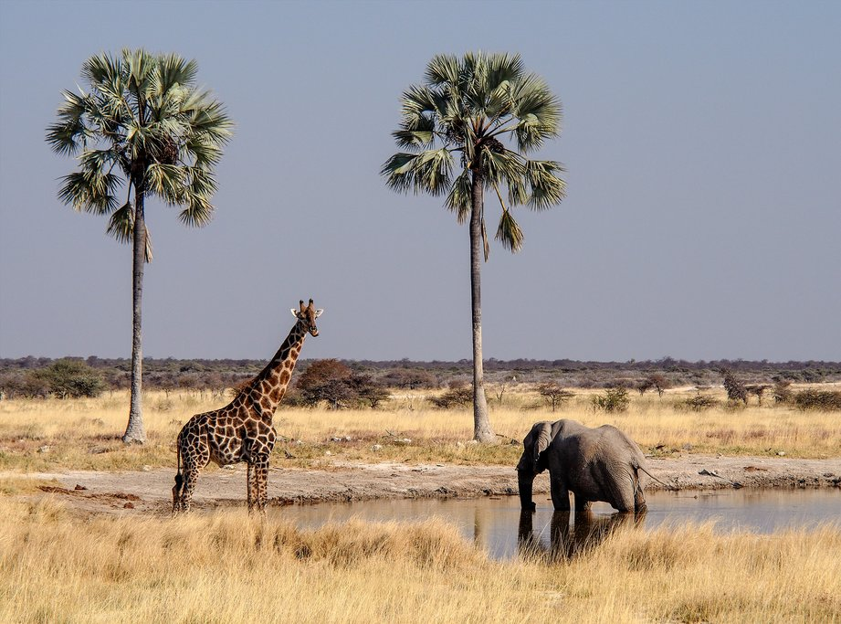 Look for giraffes and elephants (among others) in Etosha National Park