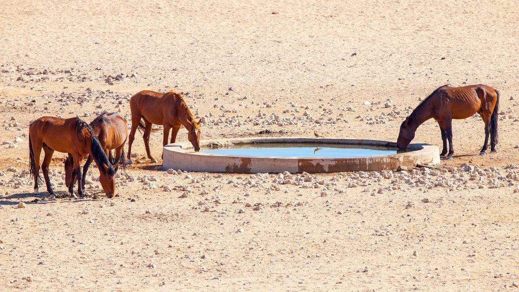 Horses in Aus